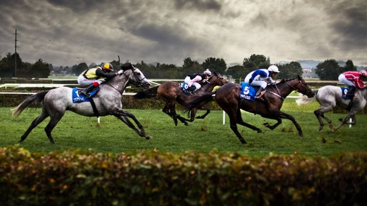 Betting laying horses to lose sure win betting tips