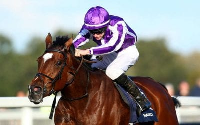 magical race horse